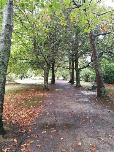 Tree-lined Esplanade Walkway