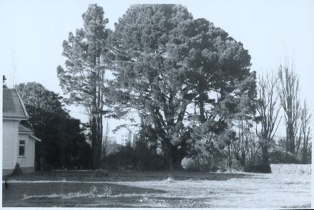 Caccia Birch Pre-Restoration Photograph