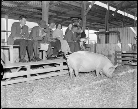 """Pedigree Pig Sale"" A&P Showgrounds"