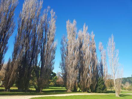 Autumn trees at Ahimate Park