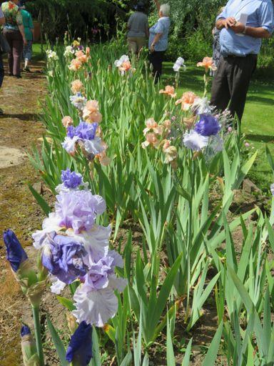 Woodleigh' garden, Marton