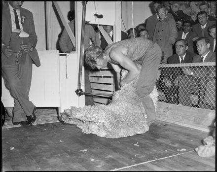 """North Island Y.F.C. Shearing Championship"""