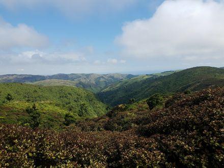 View of Kahuterawa & Arapuke Forest Park