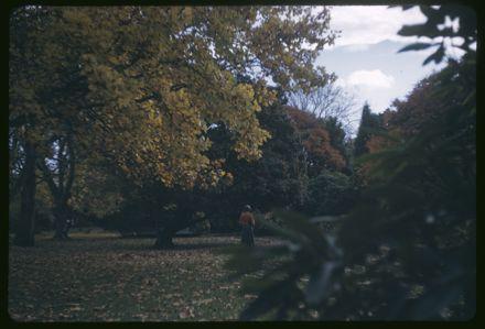 Victoria Esplanade Gardens - Trees