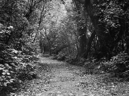 Bush walk path, Victoria Esplanade