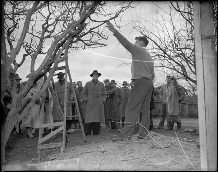 """Demonstration in Pruning"""