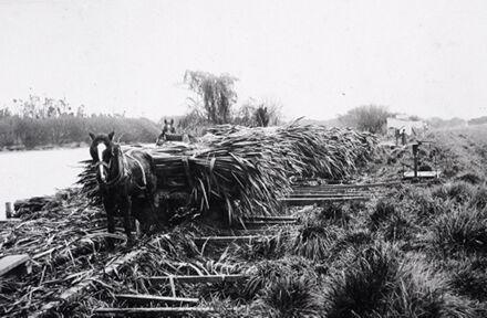 Flax transport