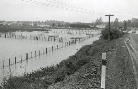 DSIR, Grassland division under flood