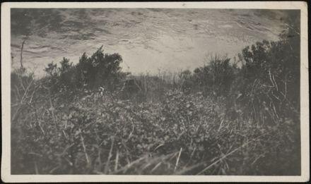 Manawatū Gorge Photograph Album - 44