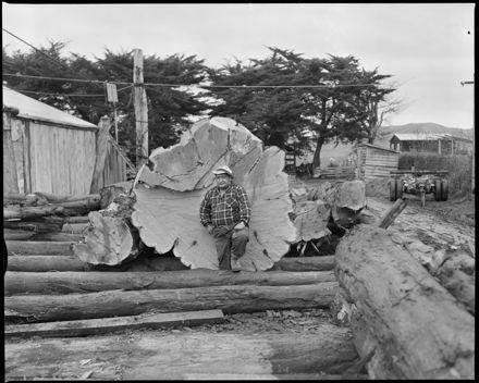 """""""Enormous Macrocarpa Log at Tiritea Mill"""""""