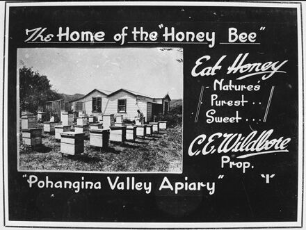 Mr Charles E Wildbore's Apiary at Pohangina