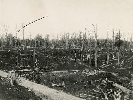 Burn-off bush near Mauriceville