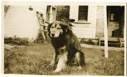 Andrews Collection: Unidentified Dog