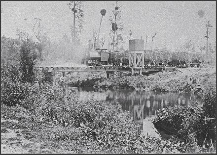 Locomotive hauling flax to Miranui Flaxmill, near Shannon