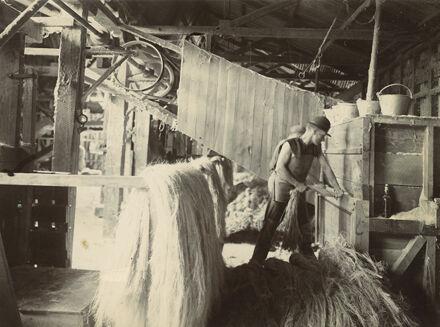 Scutching the fibre, Miranui Flaxmill, near Shannon