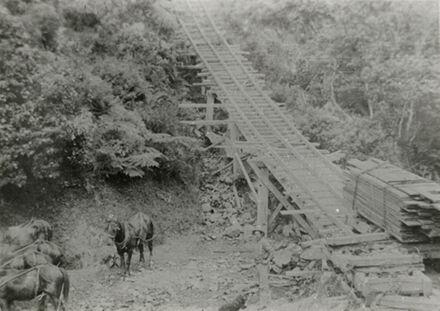 Horses waiting to transport timber, Kahuterawa