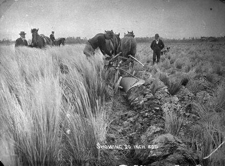 Ploughing swamp land
