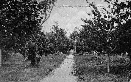 Trees in Victoria Esplanade