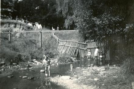 Summer at Bledisloe Park