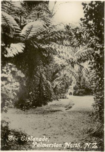 """Palmerston North Souvenir Photo Cards - """"The Esplanade"""""""