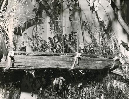 Maori trough, Manawatu Museum, Church Street