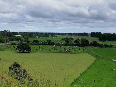 View from Te Motu o Poutoa