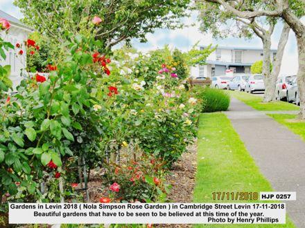 HJP 0258 Nola Simpson Rose Garden ) in Cambridge Street Levin