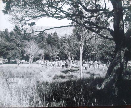 Horseshoe Bend Reserve, Tokomaru