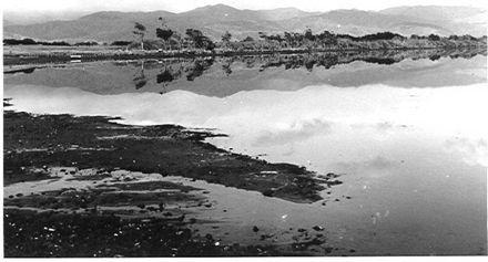 Northern end of Lake Horowhenua