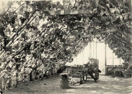 Mr Stern in his Glasshouse, Kingston Road, Shannon