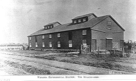 Milking-shed, Weraroa Experimental Station