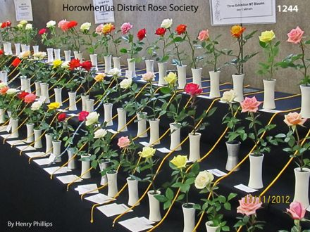 IMG_1244 Horowhenua District Rose Society