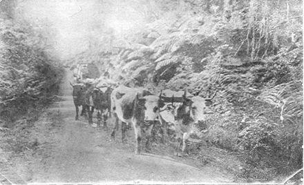 Bullock Team, The Avenue