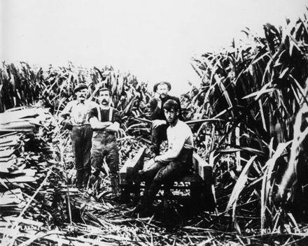 Flax Cutters, 'Miranui' Mill, Shannon