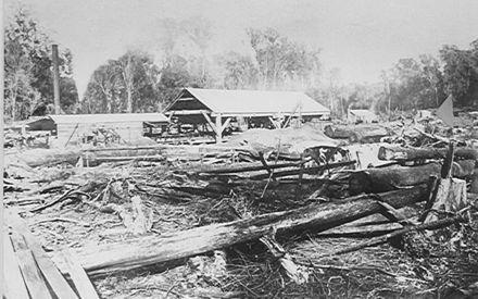 Bartholomew's sawmill, The Avenue, Levin, 1889