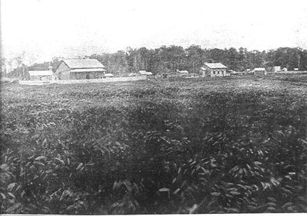 Levin State Farm