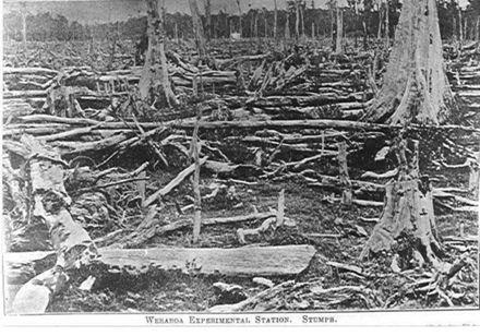 Stumps, Weraroa Experimental Station