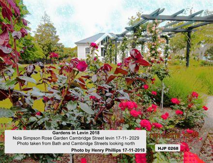 HJP 0168Nola Simpson Rose Garden, Cambridge Street, Levin 17-11-2018