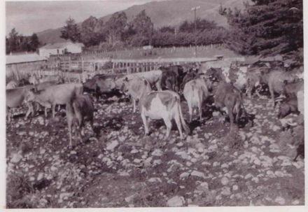 Gimblett farm, 1926