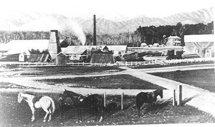 Prouse Brothers Sawmill, Weraroa, 1895