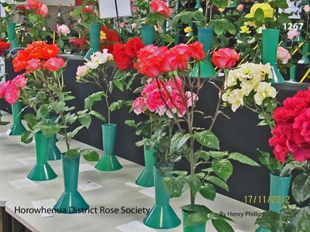 IMG_1267 Horowhenua District Rose Society