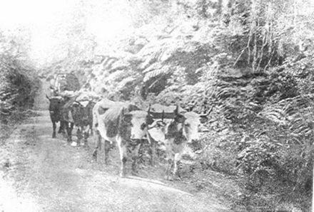 Bullock team - The Avenue