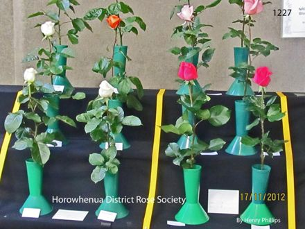 IMG_1227 Horowhenua District Rose Society