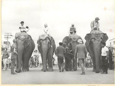 Elephant Race along Oxford Street, Levin, 1963
