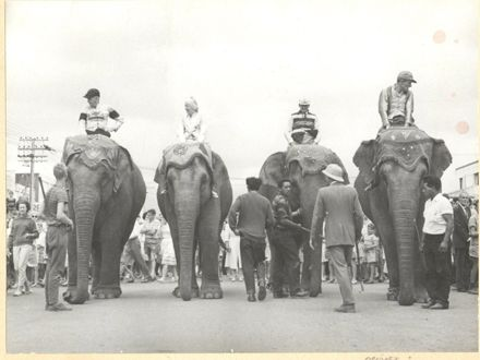 Elephant Race along Oxford Street, Levin, 1963