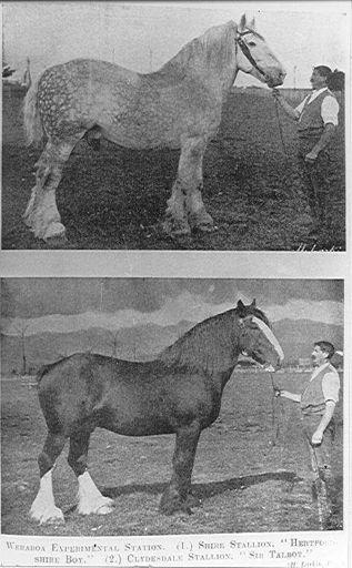Stallions, Weraroa Experimental Station