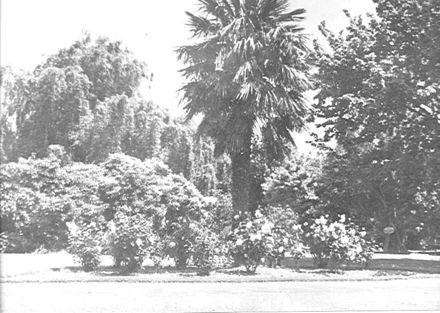Public Gardens, Levin