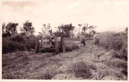 Harvesting (crop, silage or hay ?), 1962