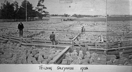 Feilding Saleyards, c. 1902