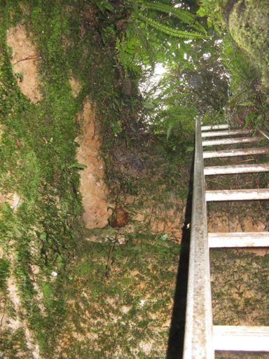 Mine entrance, Hardings Park